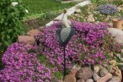 Фото 19 Шиловидный флокс: популярные сорта, особенности ухода и варианты размножения