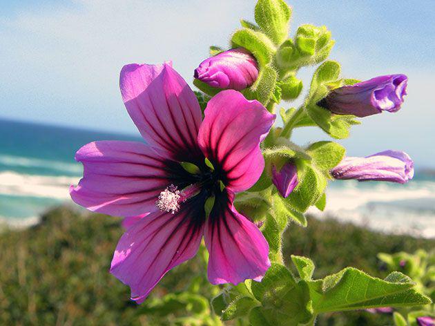 Цветок хорошо переносит скудную на питательные вещества почву, тем не менее лучше подготовить грунт