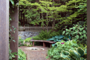 Фото 32 Сорта хосты в ландшафтном дизайне: виды, названия и особенности ухода