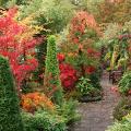 Роскошь осеннего сада — японский багрянник: все о кустарнике и правильном уходе за ним фото