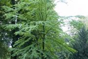 Фото 5 Роскошь осеннего сада — японский багрянник: все о кустарнике и правильном уходе за ним
