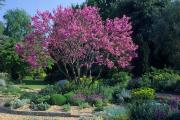 Фото 16 Роскошь осеннего сада — японский багрянник: все о кустарнике и правильном уходе за ним