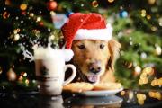 Фото 18 Идеи празднования Нового года 2019: как, где и в чем лучше всего встречать год Желтой Собаки?