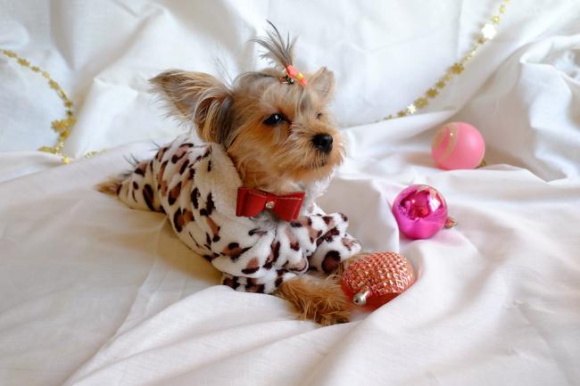 Если у вас есть собаки, не забудьте и им презентовать подарки
