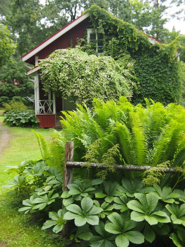 Данное растение хорошо сочетается с папоротником