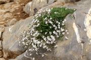 Фото 16 Гипсофила многолетняя: особенности рассады, посадки и ухода в зимний период