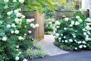 Фото 13 Гортензия лаймлайт: посадка и рекомендации по уходу от опытных садоводов