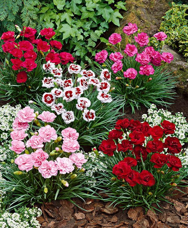 Отличный вариант для любителей ярких цветов