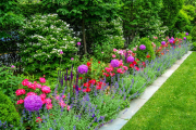 Фото 25 Турецкая гвоздика (60+ фото цветов): все секреты посадки, ухода и защиты от вредителей