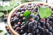 Фото 5 Ягода ирга: все секреты посадки, ухода и размножения «винной ягоды»