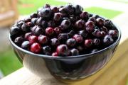 Фото 21 Ягода ирга: все секреты посадки, ухода и размножения «винной ягоды»