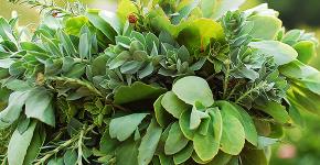 Комнатный и садовый молочай (60+ фото видов с названиями): посадка и уход за растением фото