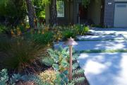 Фото 16 Комнатный и садовый молочай (60+ фото видов с названиями): посадка и уход за растением