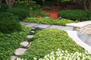 Фото 25 Комнатный и садовый молочай (60+ фото видов с названиями): посадка и уход за растением