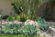 Фото 26 Комнатный и садовый молочай (60+ фото видов с названиями): посадка и уход за растением
