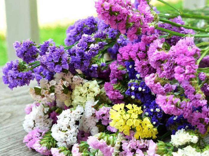 Цветы лимониум выращивание 62