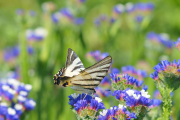 Фото 20 Статица: популярные виды, уход и правила пересаживания в открытый грунт