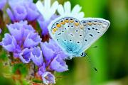 Фото 2 Статица: популярные виды, уход и правила пересаживания в открытый грунт