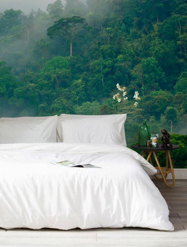 Успокаивающий декор стен фотообоями с изображением утреннего леса