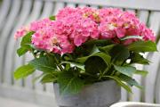 Фото 10 Ядовитые комнатные растения (фото и названия): 10 самых опасных растений, которые не стоит держать дома!