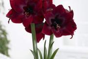 Фото 11 Ядовитые комнатные растения (фото и названия): 10 самых опасных растений, которые не стоит держать дома!