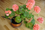 Фото 20 Ядовитые комнатные растения (фото и названия): 10 самых опасных растений, которые не стоит держать дома!