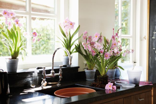 Комнатные растение должны быть равномерно распределены по подоконникам
