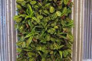Фото 8 Вертикальный сад в квартире: 60+ потрясающих идей зеленого уголка своими руками
