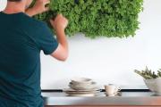 Фото 11 Вертикальный сад в квартире: 60+ потрясающих идей зеленого уголка своими руками
