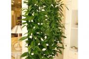 Фото 12 Вертикальный сад в квартире: 60+ потрясающих идей зеленого уголка своими руками
