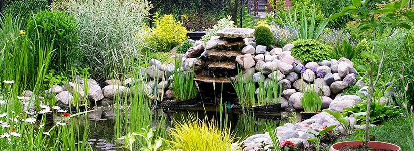 Декоративные травы и злаки для сада: 60+ идей гармоничного ландшафтного дизайна