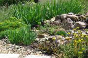 Фото 22 Декоративные травы и злаки для сада (60+ фото с названиями): полезные советы садоводов и ландшафтных дизайнеров