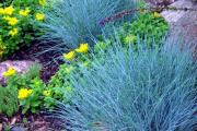 Фото 9 Декоративные травы и злаки для сада (60+ фото с названиями): полезные советы садоводов и ландшафтных дизайнеров