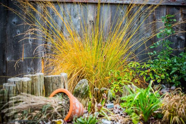 Пушистое растение станет украшением в вашем саду