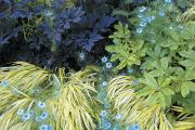 Фото 8 Декоративные травы и злаки для сада (60+ фото с названиями): полезные советы садоводов и ландшафтных дизайнеров