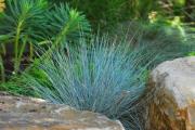 Фото 7 Декоративные травы и злаки для сада (60+ фото с названиями): полезные советы садоводов и ландшафтных дизайнеров