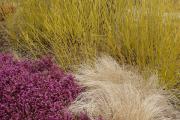 Фото 17 Декоративные травы и злаки для сада (60+ фото с названиями): полезные советы садоводов и ландшафтных дизайнеров