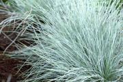 Фото 28 Декоративные травы и злаки для сада (60+ фото с названиями): полезные советы садоводов и ландшафтных дизайнеров