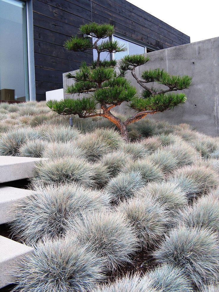Декоративные травы и злаки: Фото, названия ☘️Ландшафтный дизайн