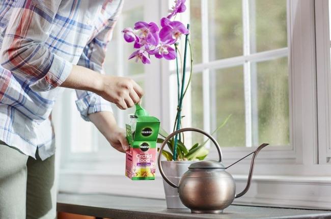 Подкармливать орхидею нужно только в период роста с интервалом между подкормками в 2-3 недели