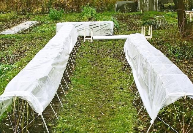 Если осень дождливая, можно накрыть розарий брезентом