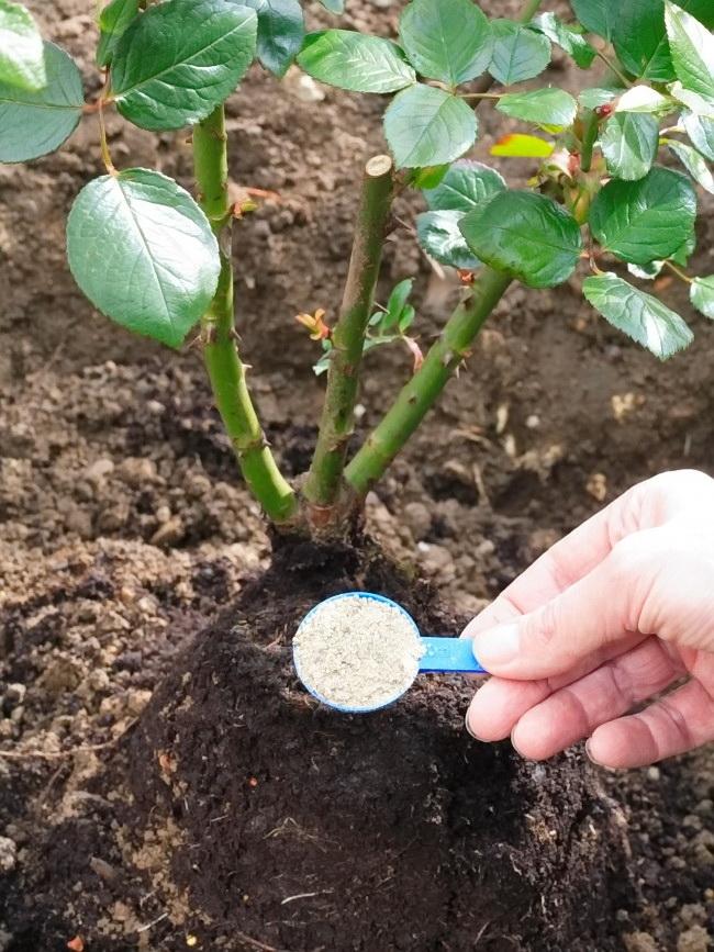 Если вы хотите приготовить удобрение самостоятельно, подойдет компост, обогащенный древесной золой