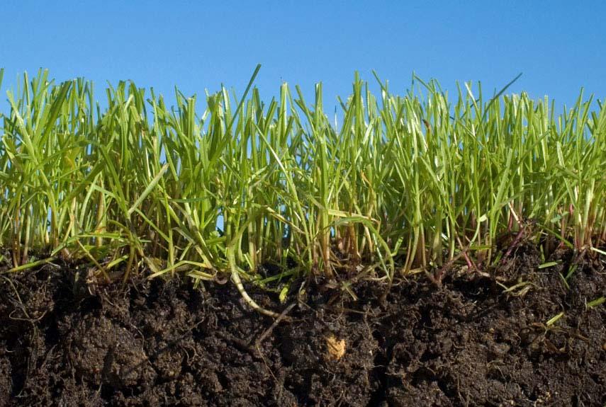 """При стрижке газона следует соблюдать """"правило 1/3"""": срезать только треть высоты травы. Слишком радикальная стрижка опасна для корневой системы травы"""
