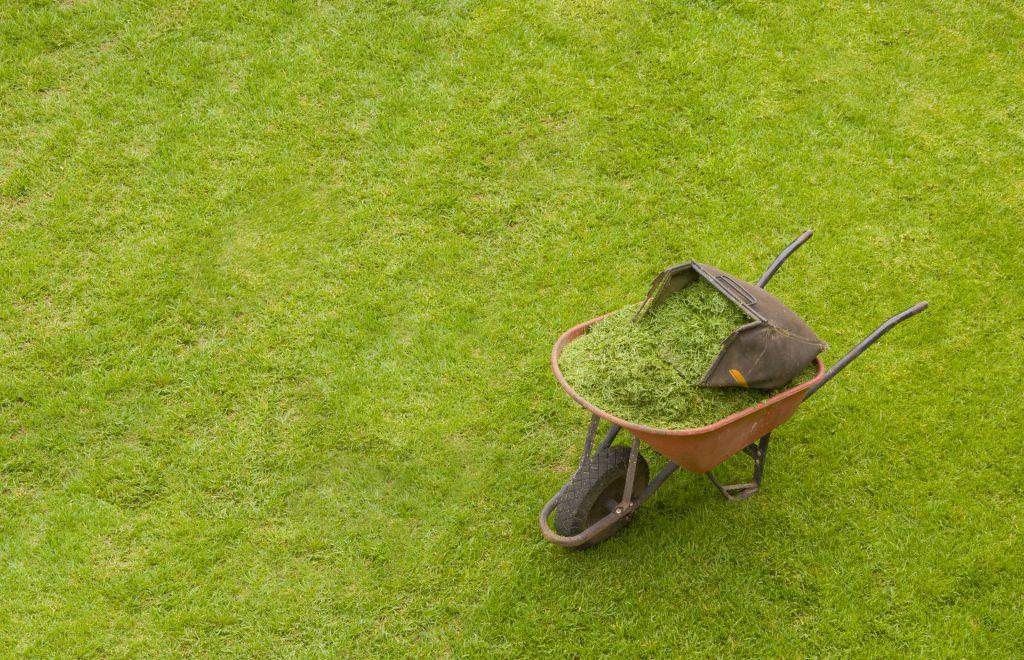 Скошенной травой из травосборника газонокосилки можно тут же мульчировать газон. Это хорошая защита от сорняков и некоторый удобряющий эффект