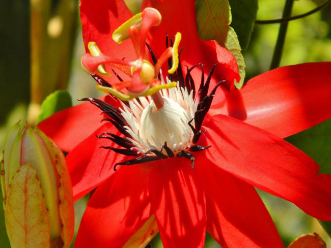 Роскошь и красота этого цветка никого не оставит равнодушным