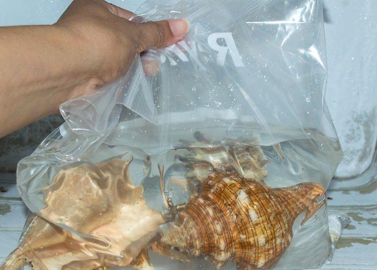 Один из способов – залить моллюски водой и поместить в морозилку