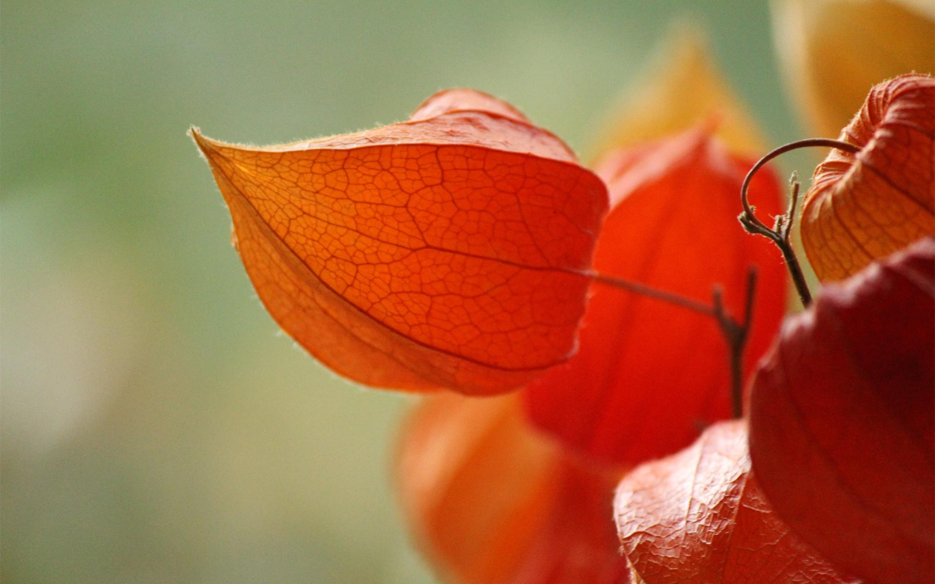 Необычная ярко-оранжевая окраска придает растению сказочности