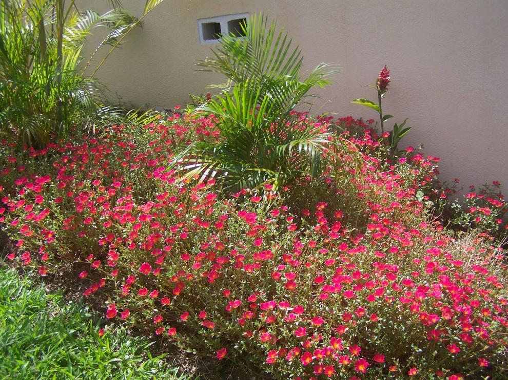 Портулак гармонично вписывается в садовый интерьер