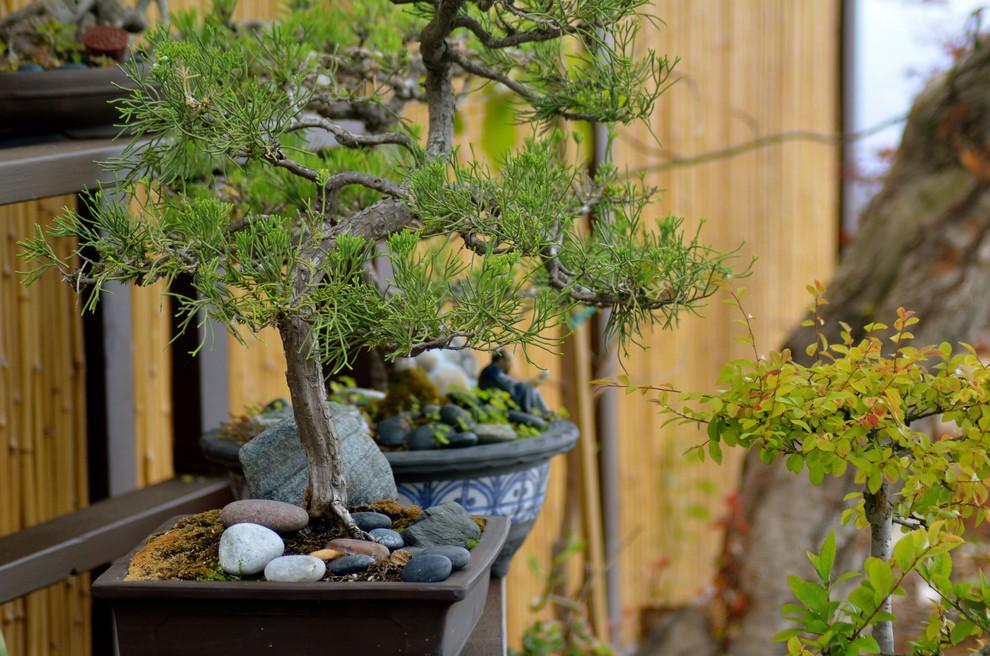 Бонсай станет отличным элементом декора вашего интерьера