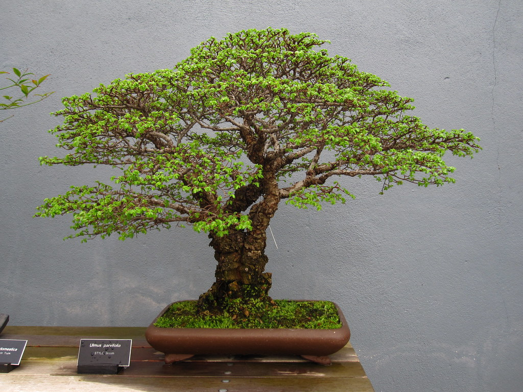 С помощью бонсая можно создавать целые пейзажи в миниатюре